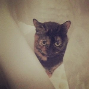 Lola enjoying the bathtub, instagrammed
